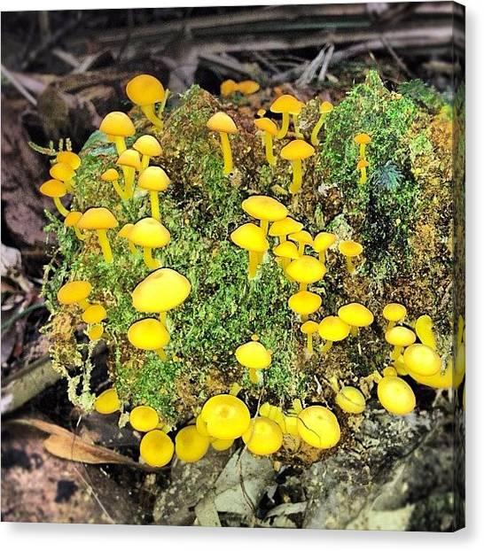 Rainforests Canvas Print - #fairyland #fungi #yellow #mushrooms by Shayle Graham