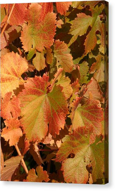 Fall Colors Canvas Print by Diane Bohna