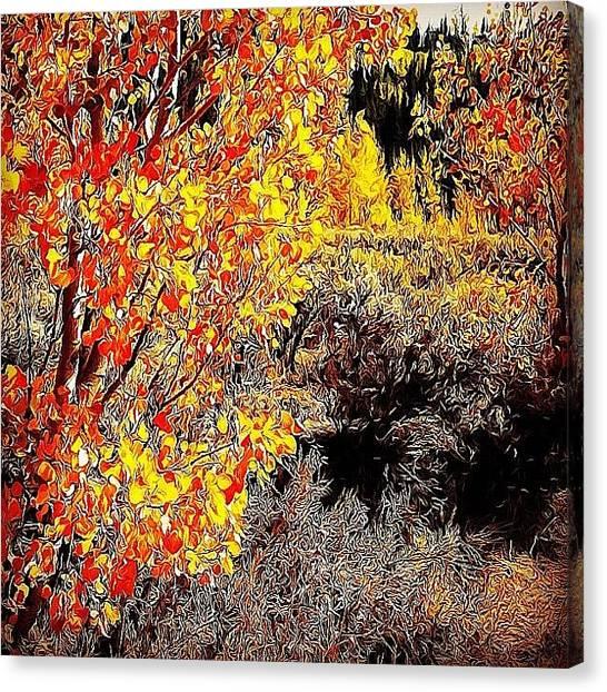 Wyoming Canvas Print - Fall Colors For Deer Season by Lisa King