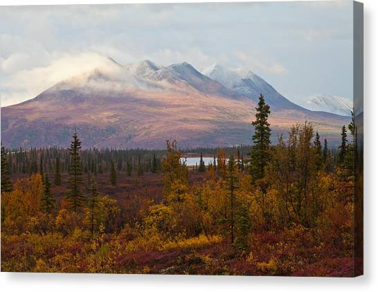 Fall Colors Of Alaska Canvas Print