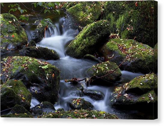Fall Colors Of The Vartry Canvas Print