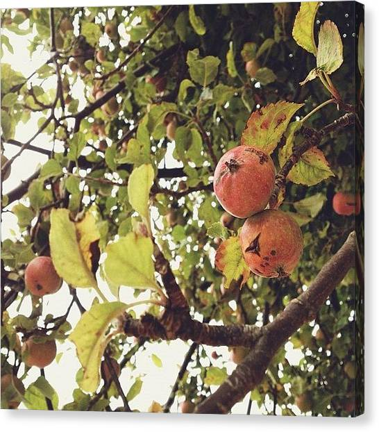 Fruit Trees Canvas Print - Fall Crab Apples. Remember This Spot by Rebecca Guss