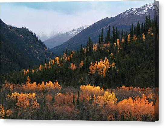 Fall Denali National Park Canvas Print