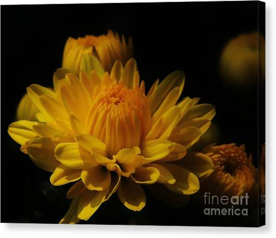 Fall Gold Canvas Print by Aubrey Campbell