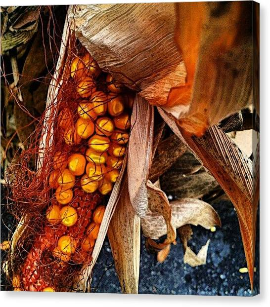 Harvest Canvas Print - Fall Harvest / Cornstalk by Elisa Franzetta