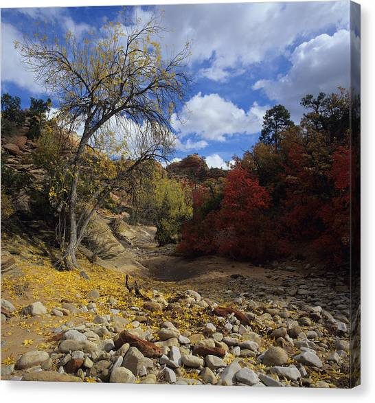 Fall In Zion High Country Canvas Print