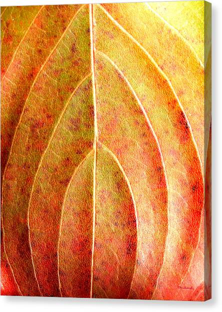 Fall Leaf Upclose Canvas Print