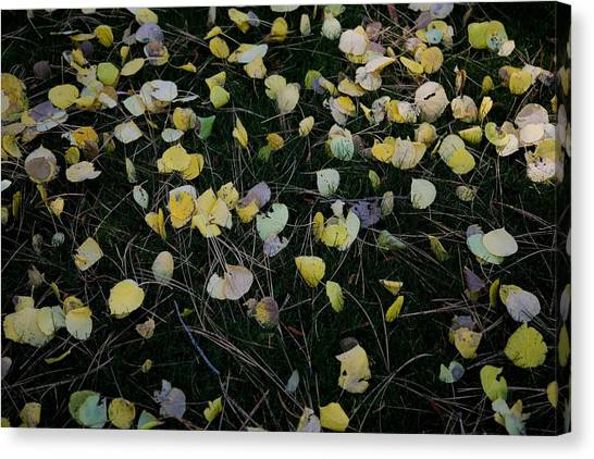Fall Leaves Canvas Print by John Wong