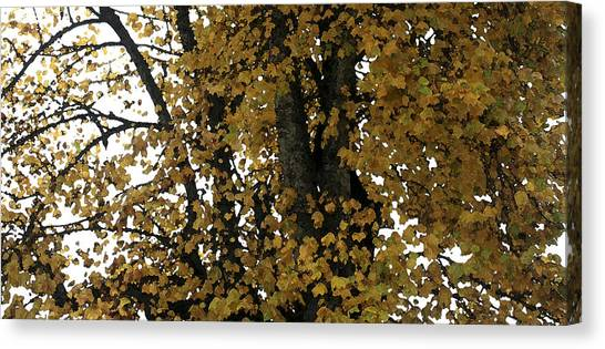Fall Leaves Panorama Canvas Print by Mary Gaines