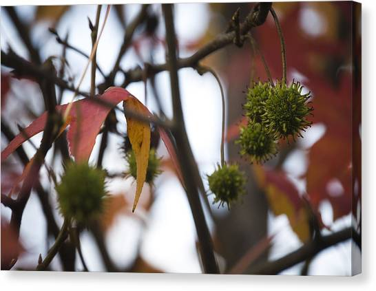 Fall Seeds Canvas Print