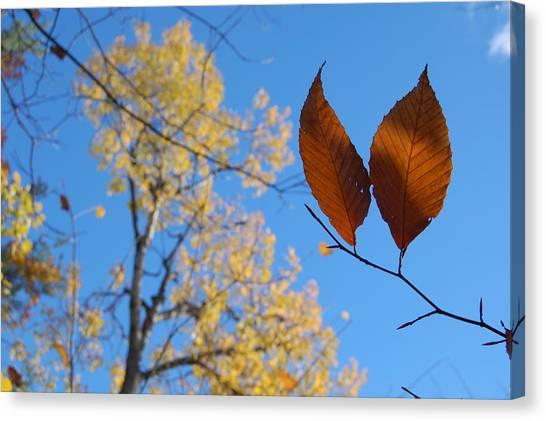 Fall Sky Canvas Print