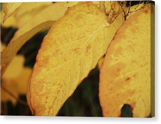Fall Sunshine Canvas Print by Terrie Taylor