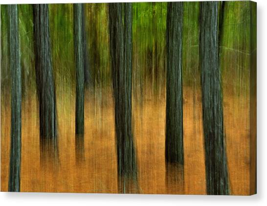 Fall Trees Canvas Print by Tamera James