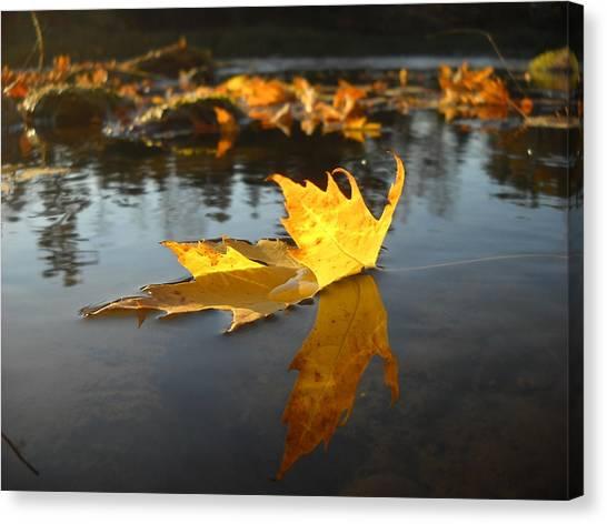 Fallen Maple Leaf Reflection Canvas Print
