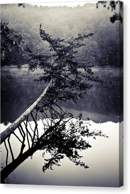 Ohio Valley Canvas Print - Fallen Tree by Christopher Burton