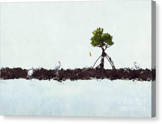 Canvas Print featuring the photograph Falling Mangrove Leaf by Dan Friend