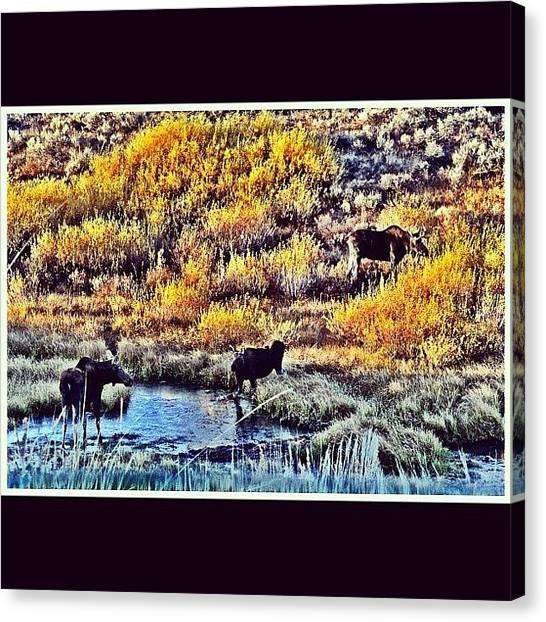 Wyoming Canvas Print - #family Of Three by Lisa King