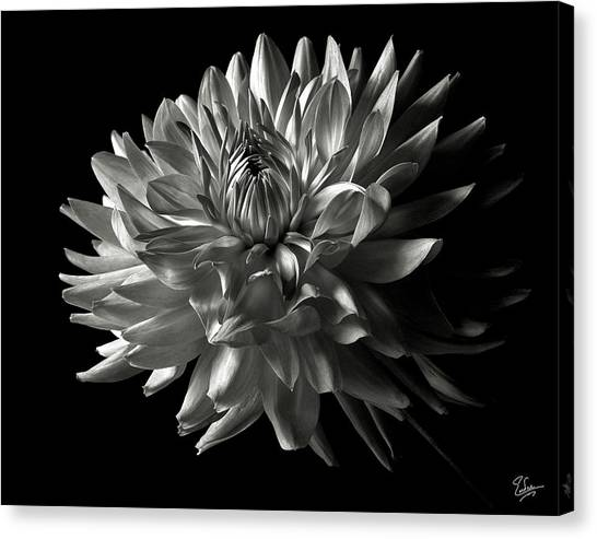 Fancy Dahlia In Black And White Canvas Print