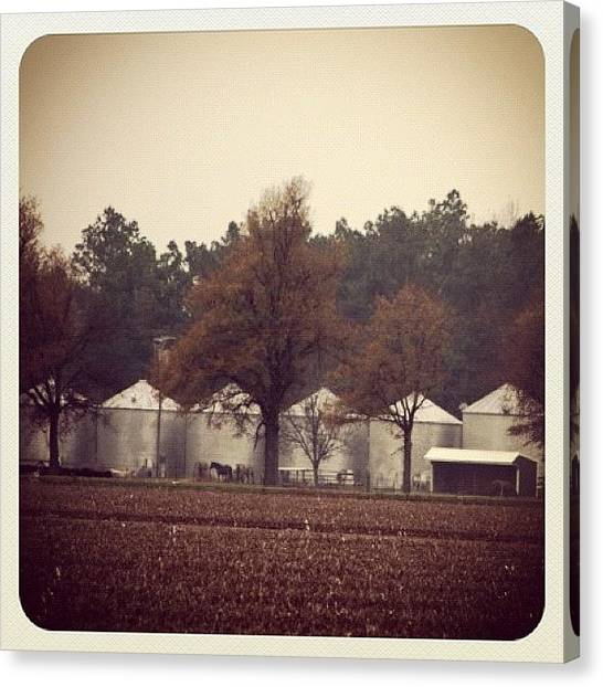 Arkansas Canvas Print - #farm #country #arkansas #field #winter by Elizabeth Fitzgerald