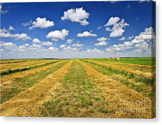 Saskatchewan Canvas Print - Farm Field At Harvest In Saskatchewan by Elena Elisseeva