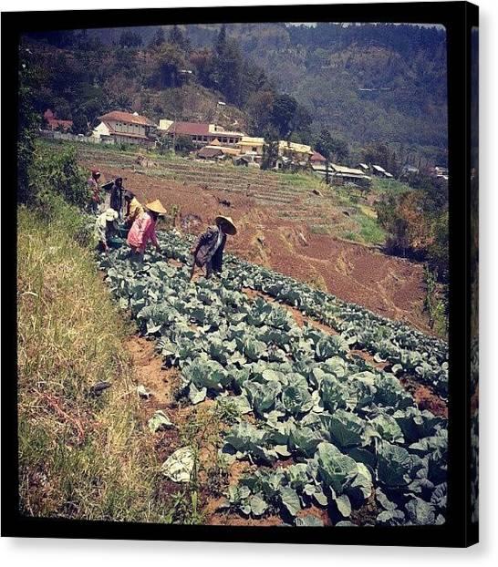 Farmers Canvas Print - Farmer #mountain #farm #hill #green by Dzaky Ramadhan Hidayat