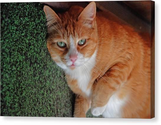 Fat Cats Of Ballard 6 Canvas Print
