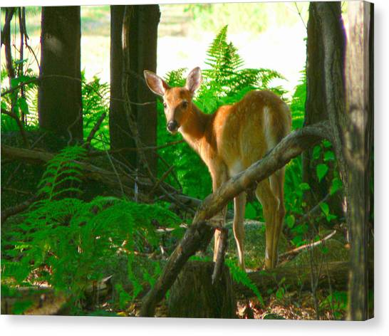 Fawn In The Woods Canvas Print by Artistic Photos