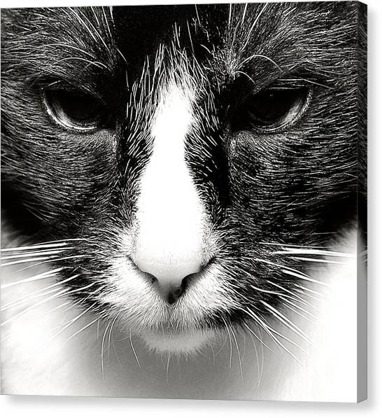 Fearless Feline Canvas Print