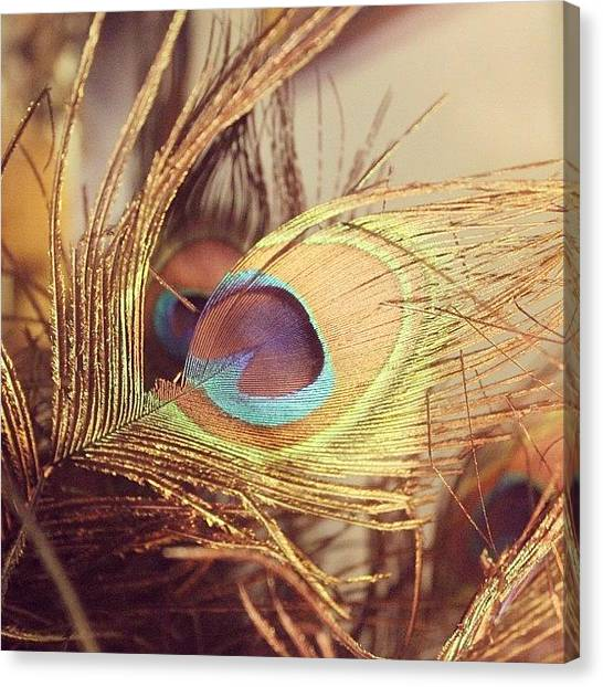 Peacocks Canvas Print - #feather #peacock #peacockfeather by Vicki Leggett