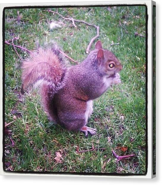 Hyde Park Canvas Print - Feeding The Squirrel by Bhanu Chawla