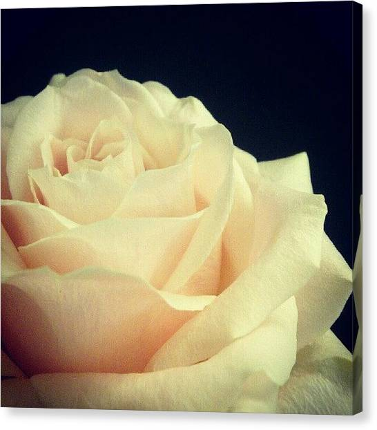 Peaches Canvas Print - Fell For This Beauty At The Flower Shop by Tess Walther