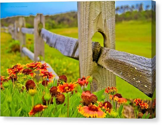 Fence Side Flowers Canvas Print by Virag Yelegaonkar