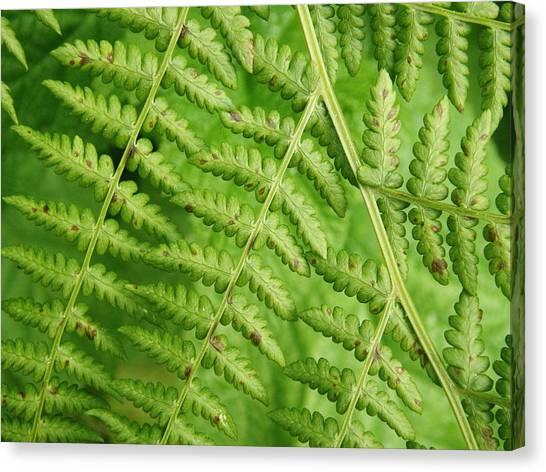 Fern Green Canvas Print