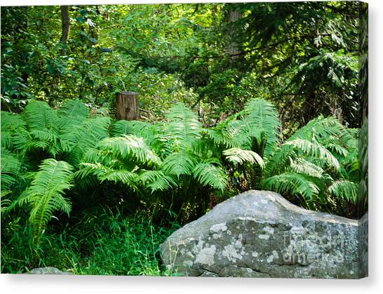 Ferns  At The Edge Of The Woods Canvas Print by Anne Boyes