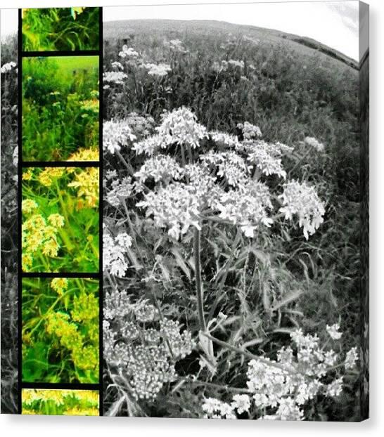 Queens Canvas Print - Field Fresh by Vicki Field