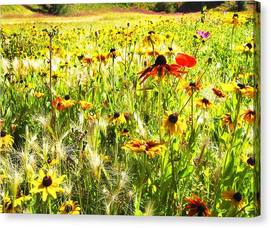 Field Of Bright Colorful Wildflowers Canvas Print
