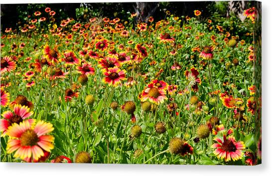 Field Of Flowers Canvas Print by Mike Rivera