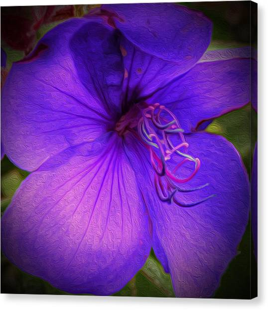 Field Of Purple Canvas Print by Jeanean Gendron