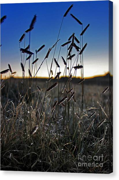 Field Of Wierdness Canvas Print by Wesley Hahn