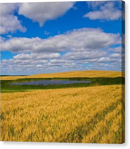 Saskatchewan Canvas Print - #fields Of #gold. #saskatchewan #wheat by Michael Squier