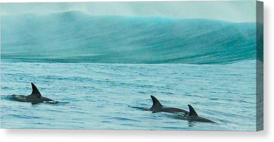 Bottlenose Dolphins Canvas Print - Finspray by Alistair Lyne