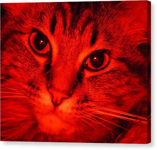 Main Coons Canvas Print - Fire Kitty by Stephanie Campbell