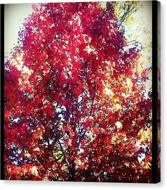 Flames Canvas Print - Fire Tree by Merinda OKeeffe