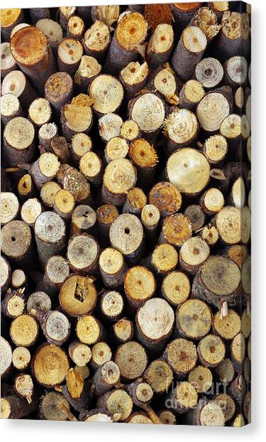 Axes Canvas Print - Firewood by Carlos Caetano