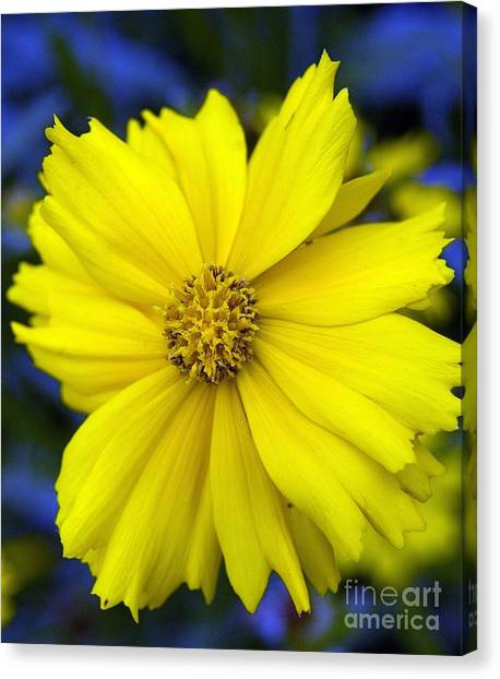 Firey Yellow Flower Canvas Print