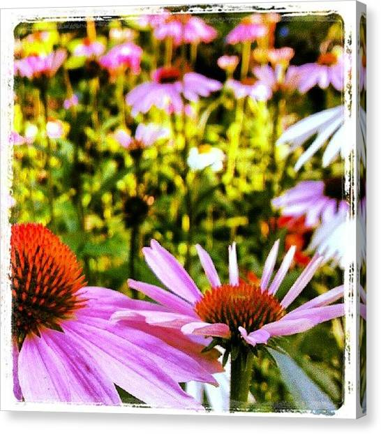 Droid Canvas Print - First Day Of #summer #pink #coneflower by Carla From Central Va  Usa