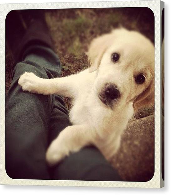 Golden Retrievers Canvas Print - First Instagram Photo by Candice Courtney
