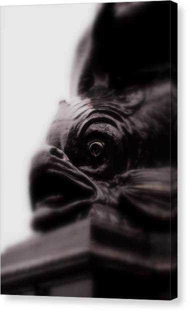 Fish Eye Canvas Print by Jacqui Collett