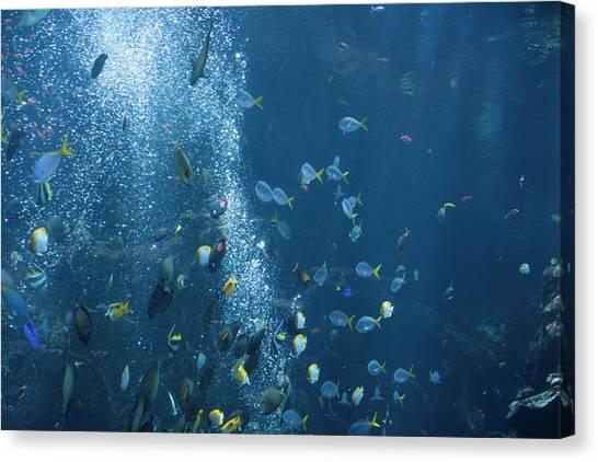Fish Menagerie Canvas Print
