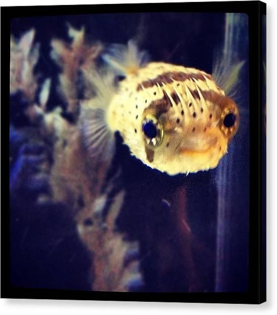 Fish Tanks Canvas Print - #fish #merkowphotography #instagram by Erik Merkow